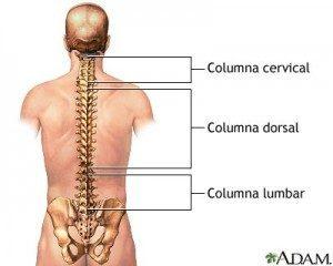 Columna Vertebral - Dolores de espalda