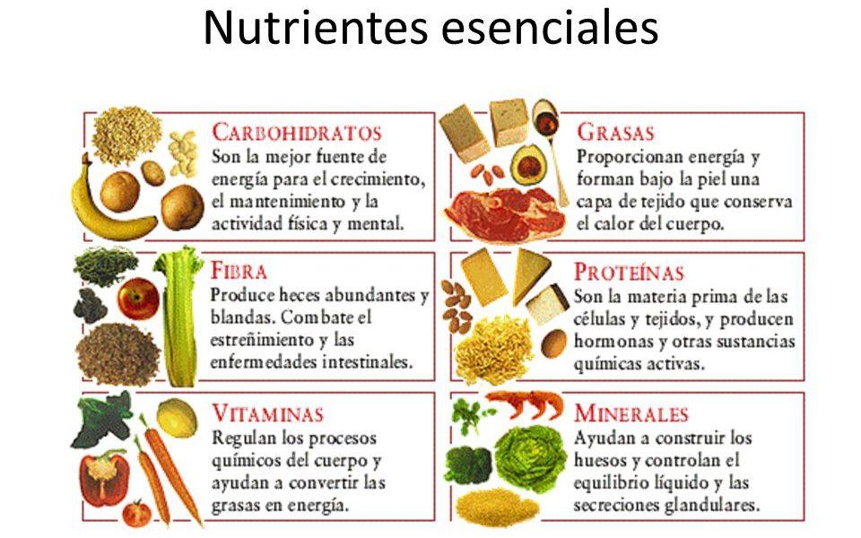 funciones que realizan los nutrientes en el organismo