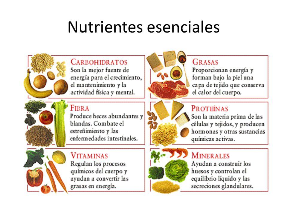 Los nutrientes b sicos gu a medica familiar - Alimentos para el crecimiento ...